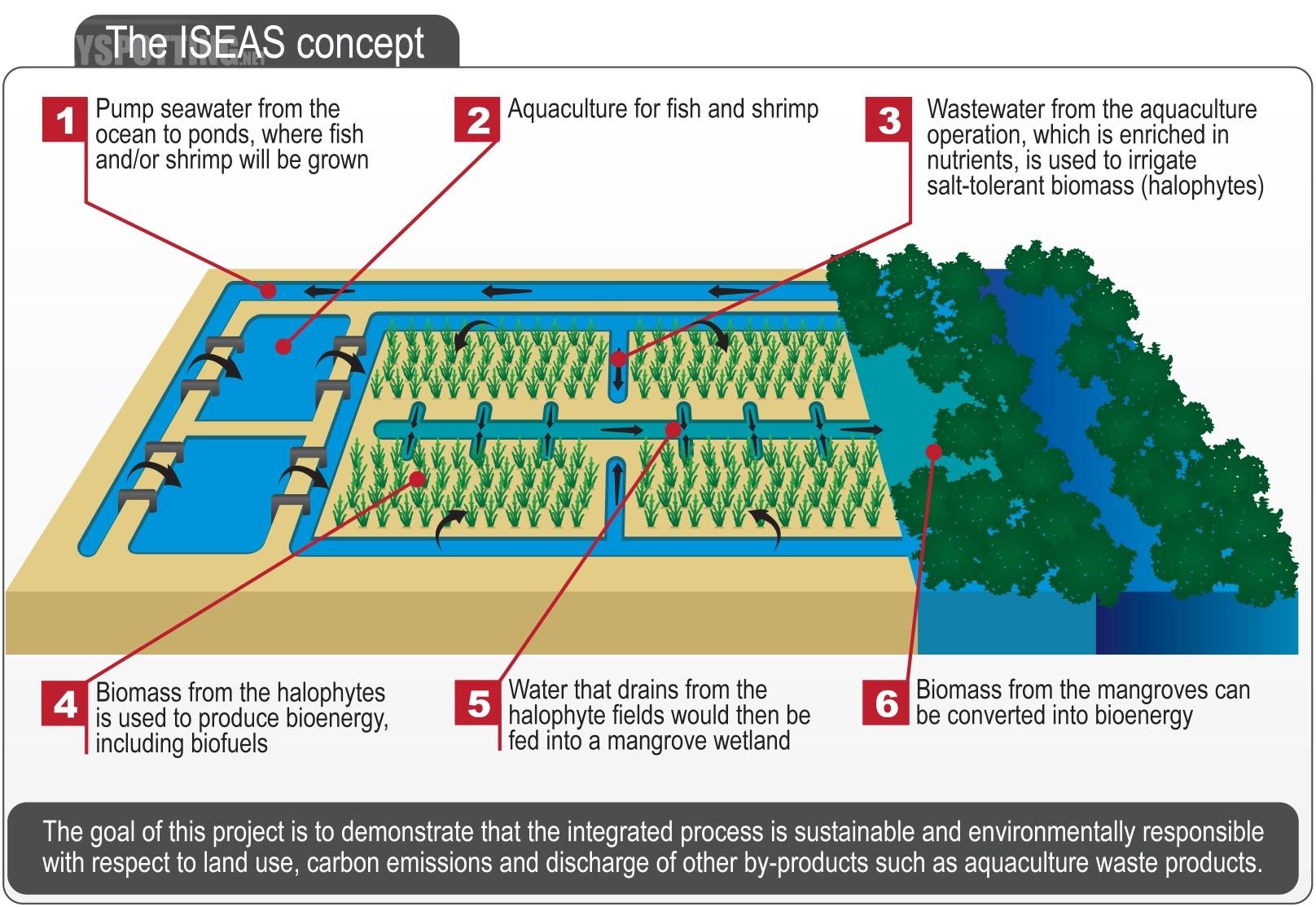 Boeing i Zjednoczone Emiraty Arabskie chcą pozyskiwać biopaliwo z roślin pustynnych