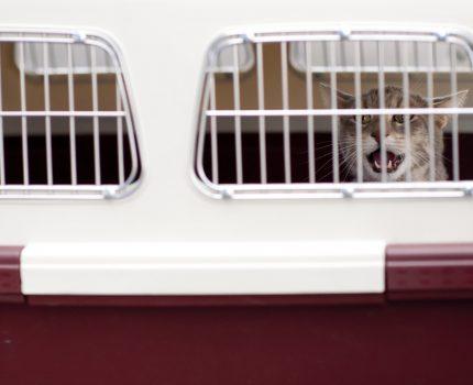 Jak podróżować samolotem ze zwierzakiem?